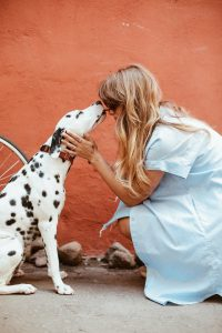 Prescott Maid to Order provides pet sitting and house sitting in addition to superior cleaning of your Prescott home.