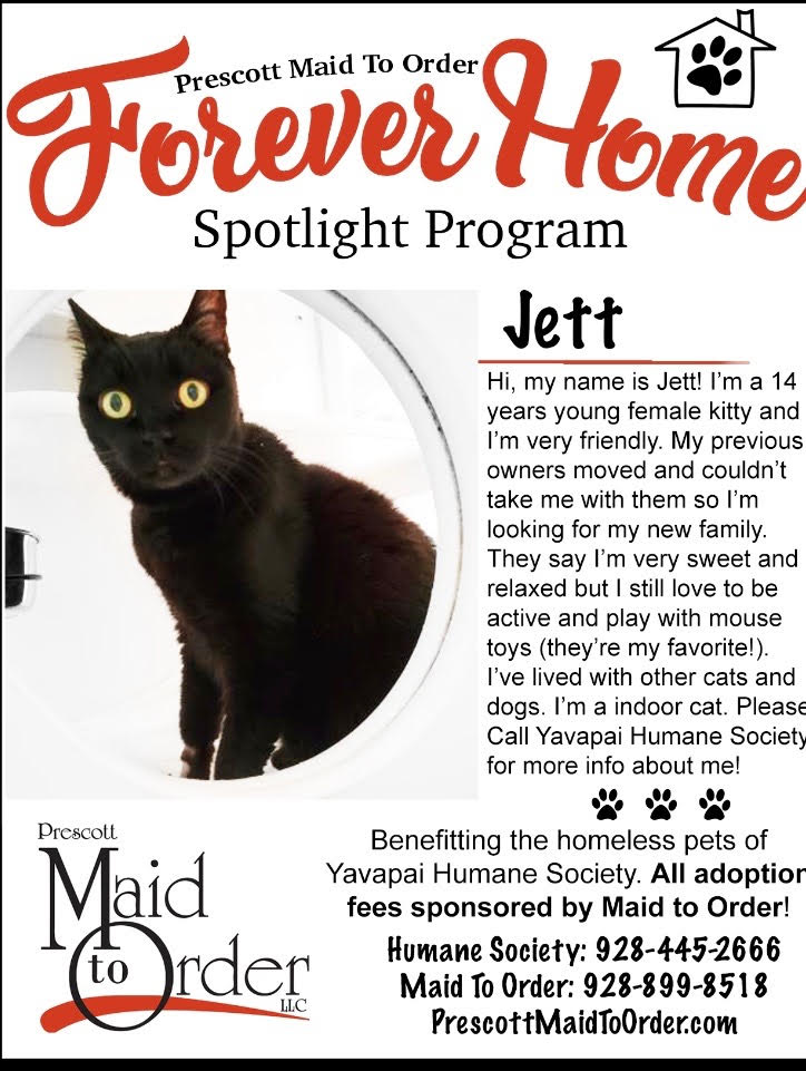 Forever Home Pet -Jett